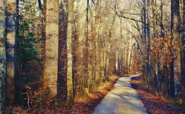 Photograph - Forest Road by Buddy Scott