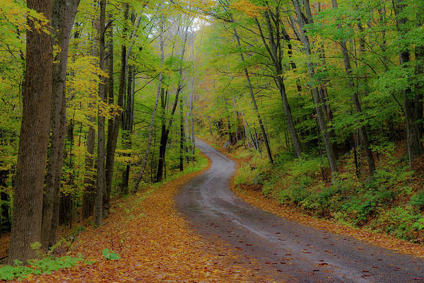 Photograph - Forest Road II by Gary Lengyel