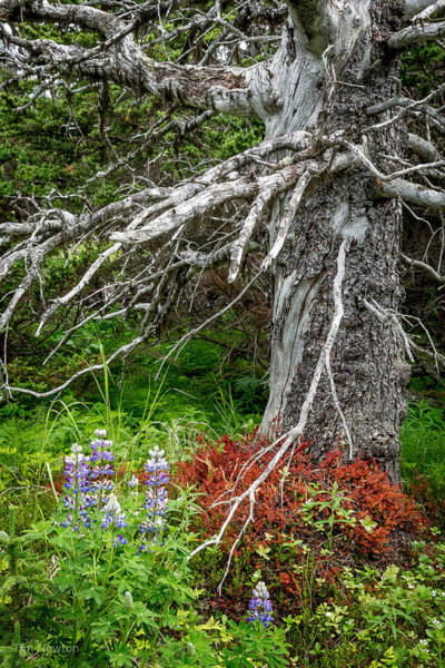 Photograph - Forest Scene by Tim Newton