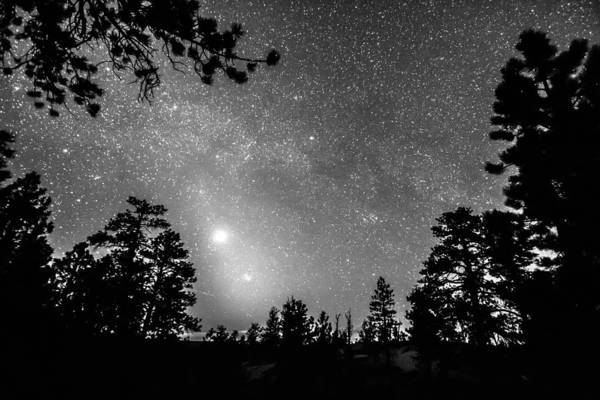 Photograph - Forest Silhouettes Constellation Astronomy Gazing by James BO Insogna