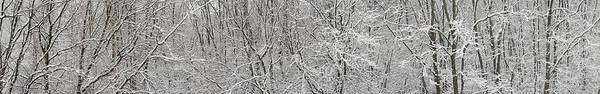 Wall Art - Photograph - Forest Snowfall by Steve Gadomski