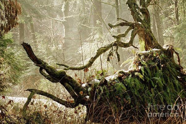 Wall Art - Photograph - Forest Spirit by Rose De Dan