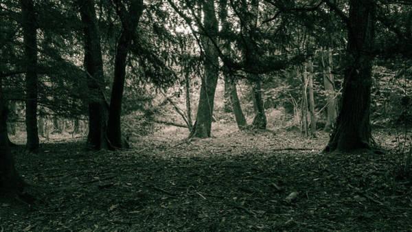 Photograph - Forest, Split Toning, Black And White Photography by Jacek Wojnarowski