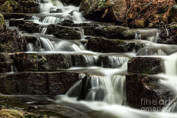 Photograph - Forest Stream by Karin Pinkham