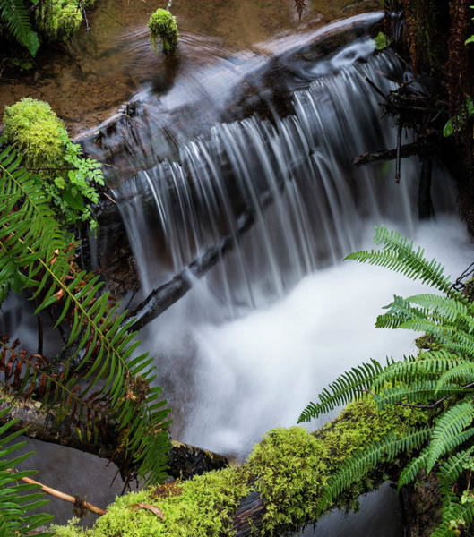 Photograph - Forest Stream by Robert Potts