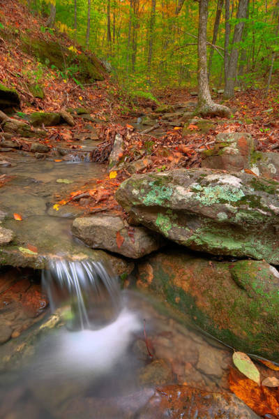 Photograph - Forest Stream by Ryan Heffron