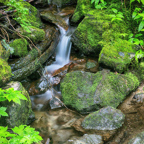 Wall Art - Photograph - Forest Stream by Stephen Stookey