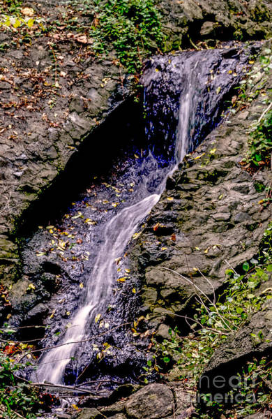 Photograph - Forest Stream by William Norton