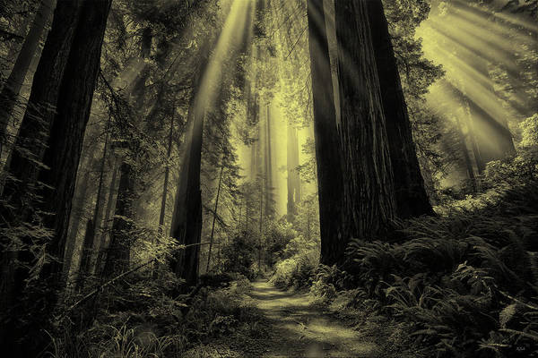 Photograph - Forest Sunbeams Black And White by Greg Norrell