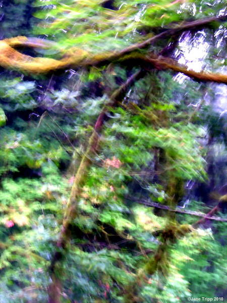 Wall Art - Photograph - Forest Symbols  by Jane Tripp