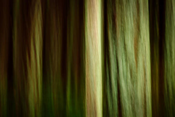 Bridle Wall Art - Photograph - Forest Texture by Thorsten Scheuermann