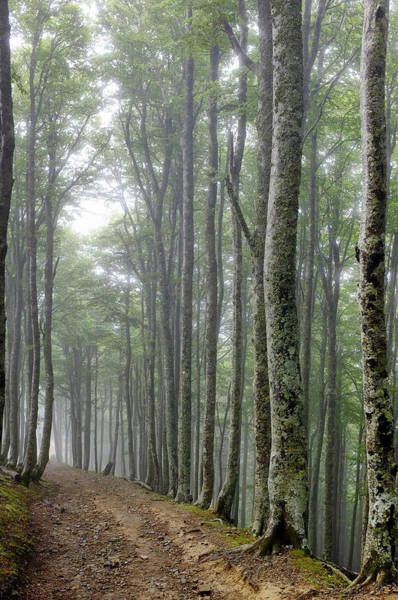 Photograph - Forest Track Near Roncesvalles by Fabrizio Troiani