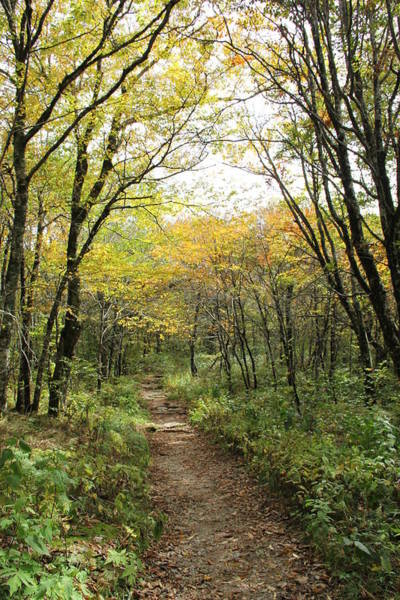 Photograph - Forest Trail by Allen Nice-Webb