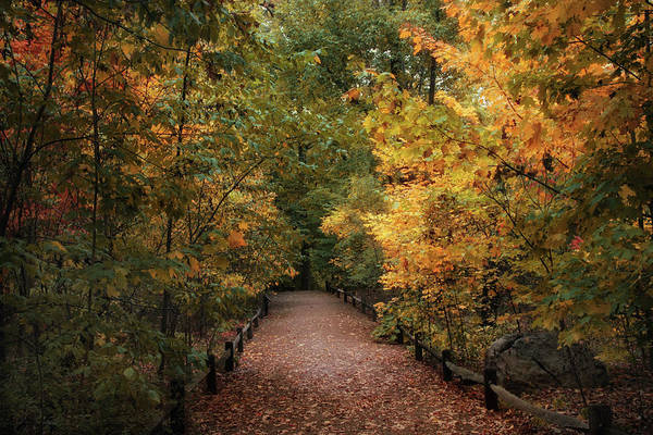 Photograph - Forest Trail by Jessica Jenney