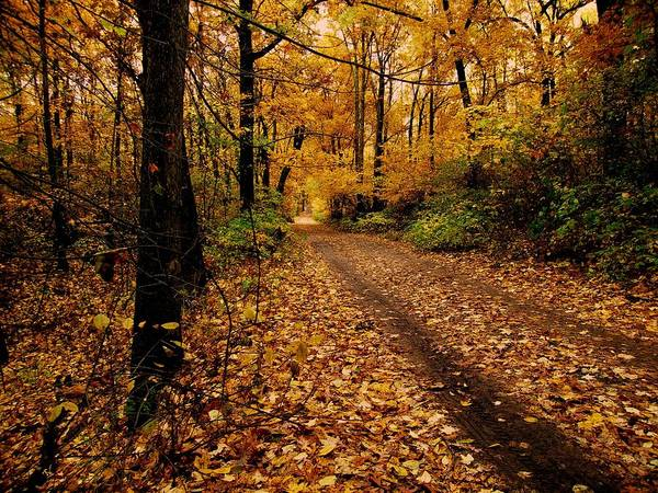 Photograph - Forest Trail by Scott Hovind