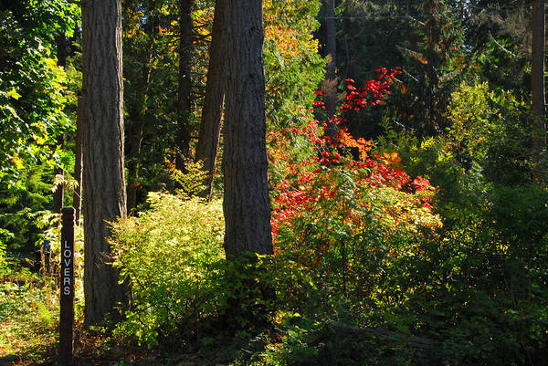 Photograph - Forest Trails by Lynn Bauer