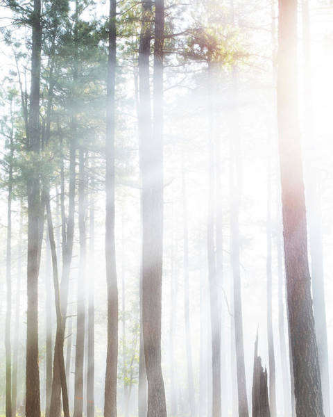 Wall Art - Photograph - Forest Trees In Dense Fog With Sunlight by Susan Schmitz