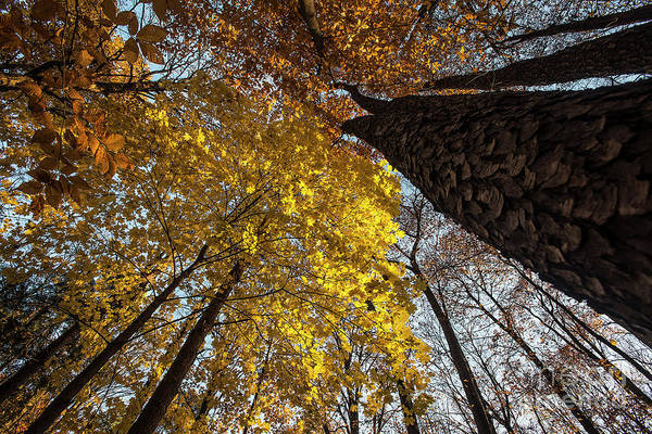 Photograph - Forest Trees-yellow-orange by Steve Somerville