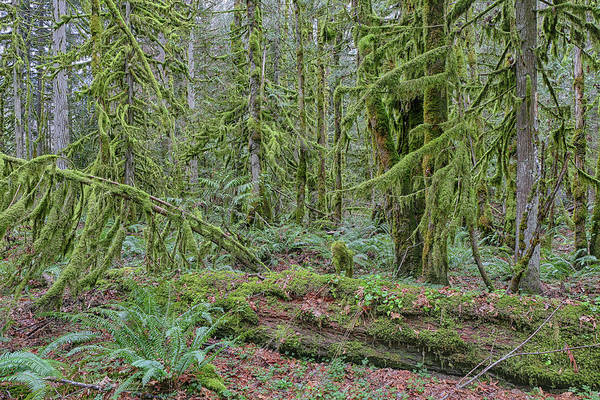 Wall Art - Photograph - Forest Undergrowth by Paul Fell