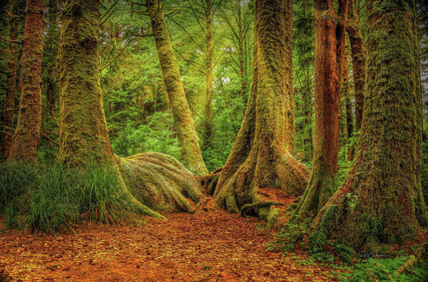 Photograph - Forest Walk by Bill Posner