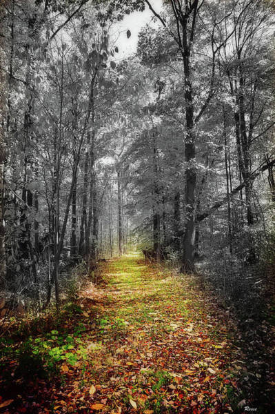 Fall Scenery Mixed Media - Forest Walk by Reese Lewis