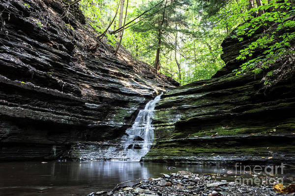 Wall Art - Photograph - Forest Waterfall by MGL Meiklejohn Graphics Licensing