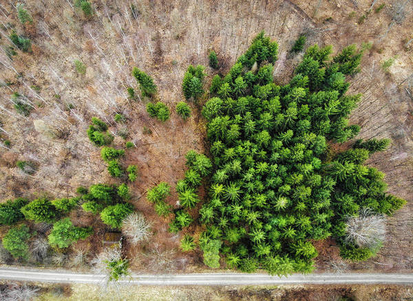 Photograph - Forest With Green Trees From Above by Matthias Hauser