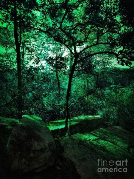 Photograph - Foresta Profonda by Rachel Hannah