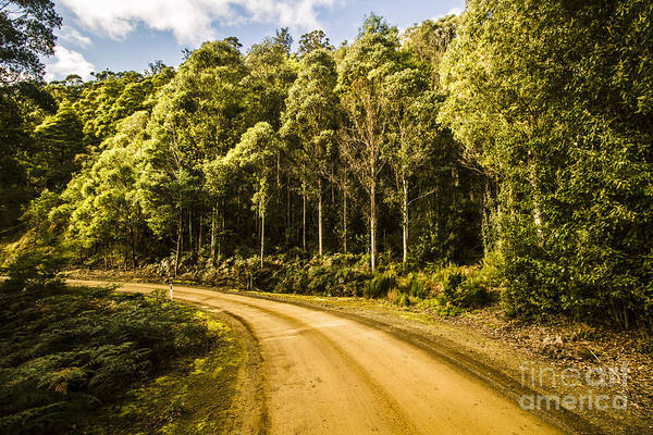 Forestry Photograph - Forestry Trails And Scenic Routes by Jorgo Photography - Wall Art Gallery