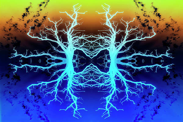 Photograph - Forests Spirits In Technicolour by John Williams