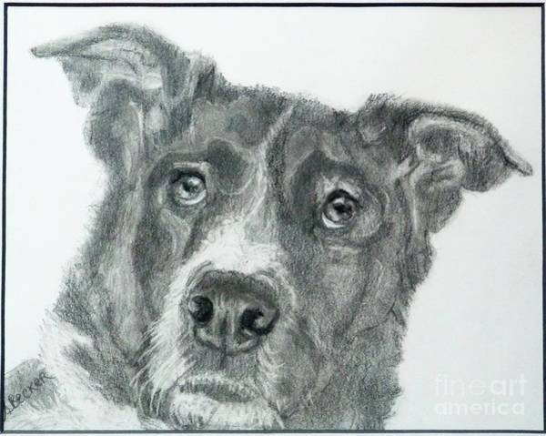Drawing - Forever My Friend by Susan A Becker