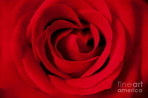Wall Art - Photograph - Forever Red by Julia Hiebaum