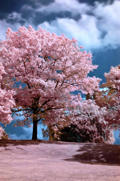 Photograph - Forever Spring by Helga Novelli