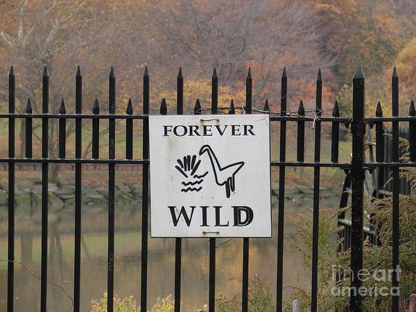 Photograph - Forever Wild by Cole Thompson