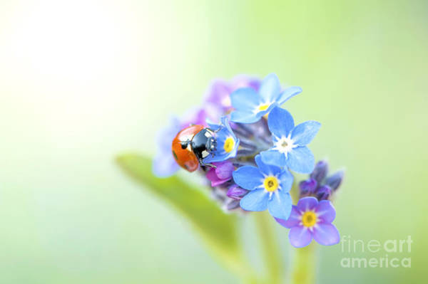 Ladybird Wall Art - Photograph - Forget Me Not Lady by Jacky Parker