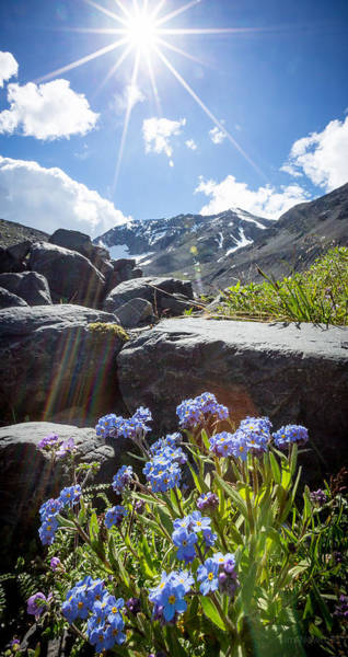 Photograph - Forget-me-not Vignette by Tim Newton