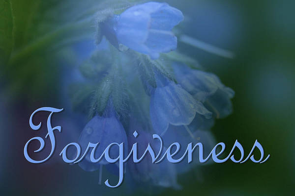 Photograph - Forgiveness Blue Bells by Ann Lauwers