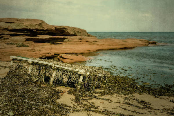 Photograph - Forgotten Lobster Trap by Chris Bordeleau