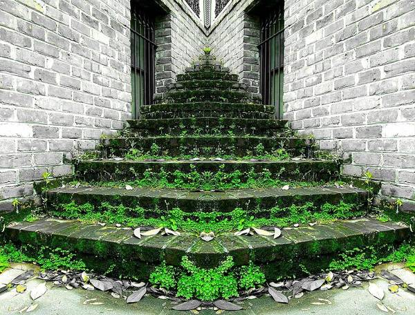 Photograph - Forgotten Stairs by Christopher Brown