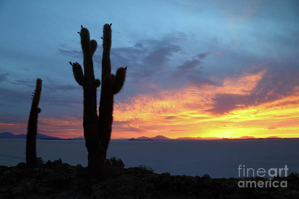 Photograph - Forked Cactus At Sunset Salar De Uyuni Bolivia by James Brunker