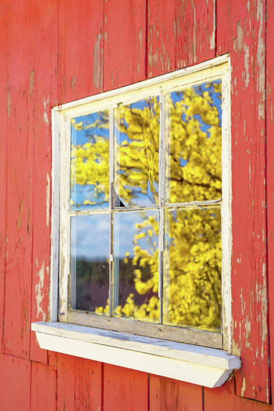 Photograph - Forsythia Reflection 1 by Brian Hale