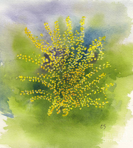 Forsythia Painting - Forsythia Study 1 In Watercolor by Conni Schaftenaar