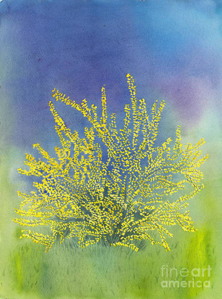 Forsythia Painting - Forsythia Study 4 Watercolor by Conni Schaftenaar
