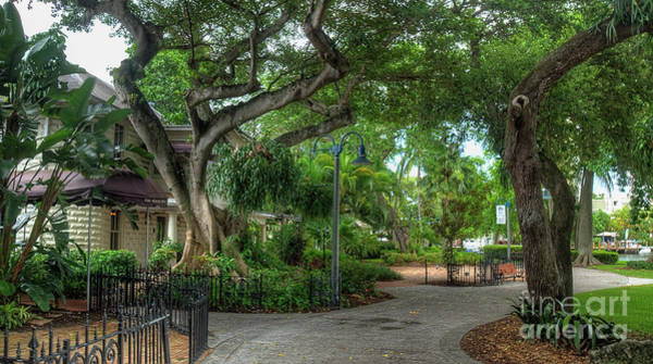 Staghorn Fern Photograph - Fort Lauderdale Riverwalk Scenic by Ules Barnwell