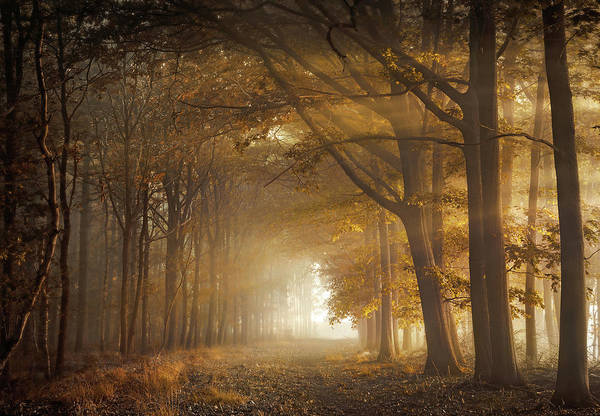 Photograph - Fortune Forest by Rob Visser