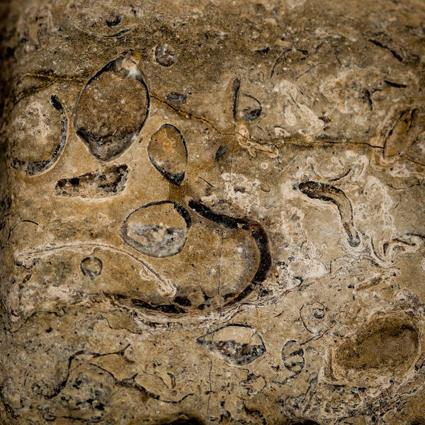 Photograph - Fossil Patterns by Jeff Phillippi