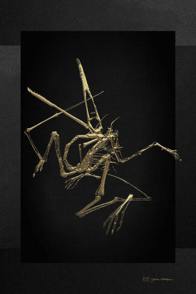 Digital Art - Fossil Record - Gold Pterodactyl Fossil On Black Canvas #1 by Serge Averbukh