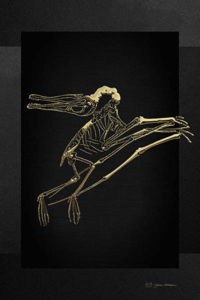 Digital Art - Fossil Record - Gold Pterodactyl Fossil On Black Canvas #2 by Serge Averbukh