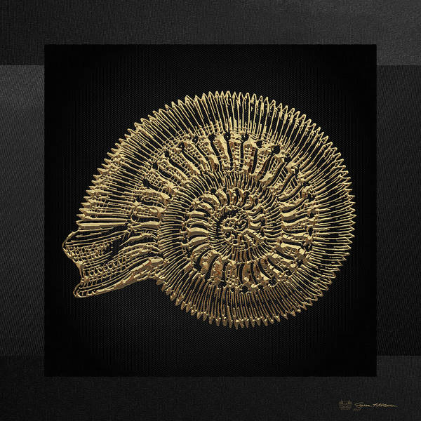 Digital Art - Fossil Record - Golden Ammonite Fossil On Square Black Canvas #2 by Serge Averbukh