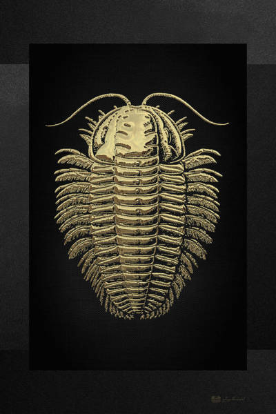Digital Art - Fossil Record - Golden Trilobite On Black No.1 by Serge Averbukh